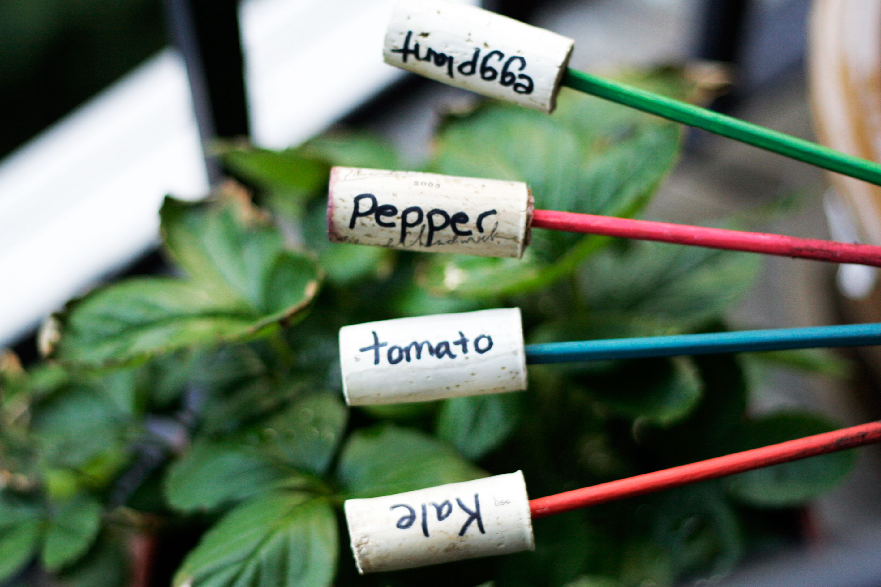 DIY: Plant Markers for you Garden | All Put Together